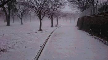 雪の本陸.JPG